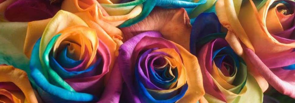 spruce grove flowers and gifts rainbow roses